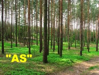 Olsztyn: Sprzedam działkę/grunt 11900 m2 - GODKI