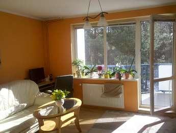 Olsztyn: Przytulne mieszkanie do wynajęcia