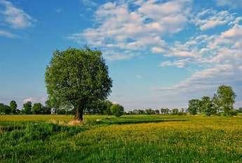 Olsztyn: Sprzedam działkę/grunt 100000 m2 - KRONOWO-LAMKOWO